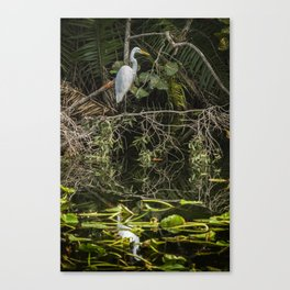 Great White Egret on a Branch Canvas Print