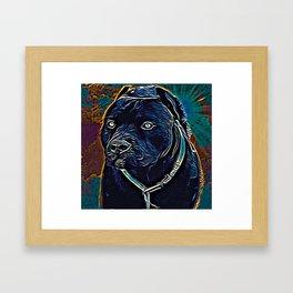 Pit Bull Models: Khan 02-06 Framed Art Print