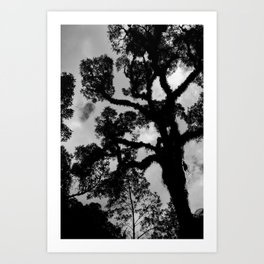 Branched curve tall tree and sky with clouds in the  background. Art Print