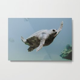 sea turtle v Metal Print
