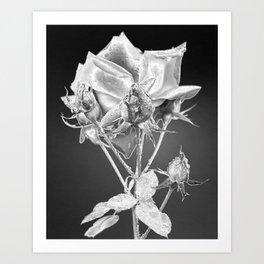 Chrome Rose Art Print