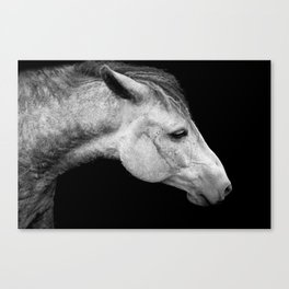 Casper | Horse Photography | Animal Art | Minimalism | Nature | black-and-white Canvas Print