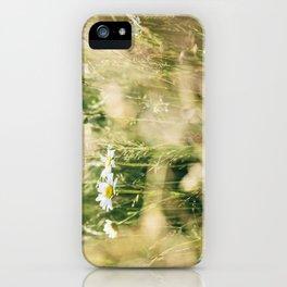 Oxeye Daisy among wild grasses. Norfolk, UK. iPhone Case