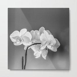 monochrome orchid Metal Print