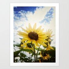 Summer Sunflower Sky Art Print
