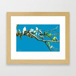 Budgies On Blue Framed Art Print