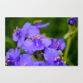 Purple flowers at the Zilker Botanical Gardens Canvas Print