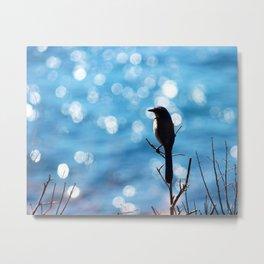 Western Scrub Blue Jay in Big Sur Metal Print
