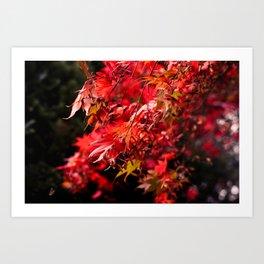 Autumn At Winkworth Art Print