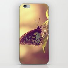 Butterfly 02 iPhone & iPod Skin