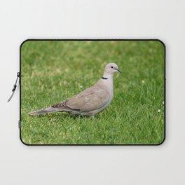 Grey Collared Dove Bird Laptop Sleeve