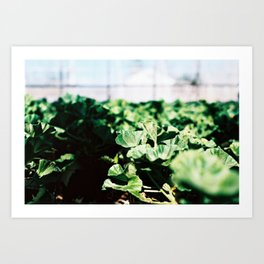 Greens in the Greenhouse Art Print