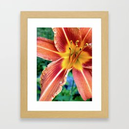 Daylily Framed Art Print