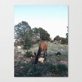 Iphone Untitled 17 Canvas Print