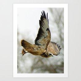 buzzard in the sky Art Print