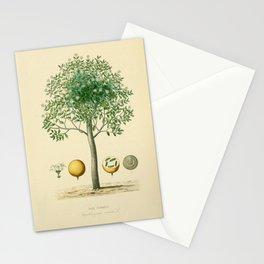Tree strychnos nux vomica10 Stationery Cards