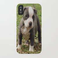 pit bull iPhone & iPod Cases featuring Pit Bull Puppy by MandiMccl