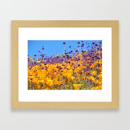 Orange Poppies and Purple Wildflowers with Butterfly (2) by Reay of Light Framed Art Print