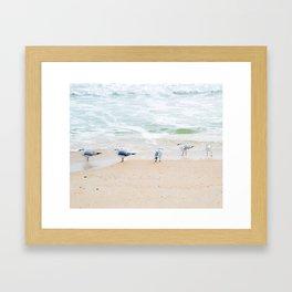 Beach Birds Framed Art Print