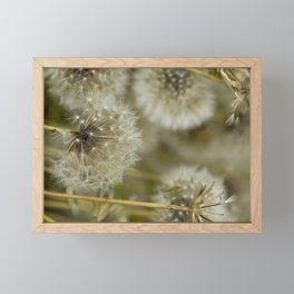 Dandelion - Autumn Flowers - Original Nature Photography (PF00001) Framed Mini Art Print
