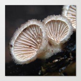 Schizophyllum commune Canvas Print