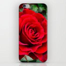 Rose revolution iPhone Skin