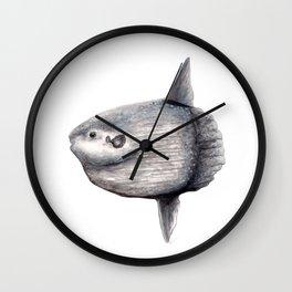 Sunfish (Mola mola) Wall Clock
