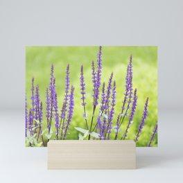 Salvia Flowers 3 Mini Art Print