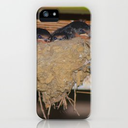 Baby Barn Swallows iPhone Case