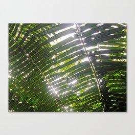 Hawaiian Palm Canvas Print