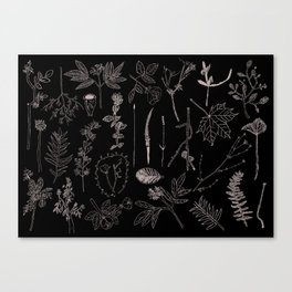 Nature Botanical Drawings by young kid artists, profits are donated to The Ivy Montessori School Canvas Print