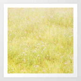 Sweet Light Wild Flowers Art Print