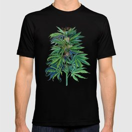 Cannabis Scientific Illustration T-shirt