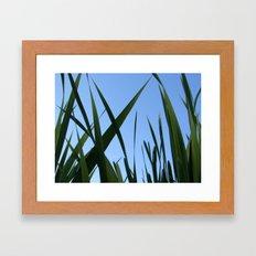 Blades of Grass Framed Art Print
