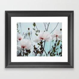 Matilija White Poppies Framed Art Print