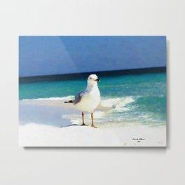 Emerald Coast Seagull  Metal Print