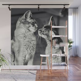 Cute cats who are curious about each other! Wall Mural