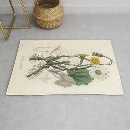 Coltsfoot (Tussilago farfara)  from Medical Botany (1836) by John Stephenson and James Morss Churchi Rug