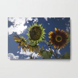 Summer Sunflowers-160830-458 Metal Print