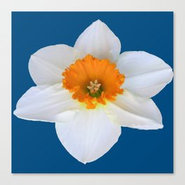 DECORATIVE ORANGE CENTERED WHITE DAFFODIL TEAL ART Canvas Print