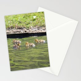 Swimming Baby Ducks Stationery Cards