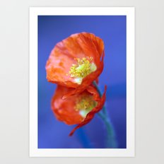 Californien poppy Art Print