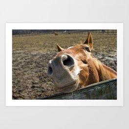 Nosy Horse Farm / Domestic Animal Photograph Art Print