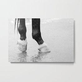 Horse Bath Metal Print