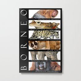 Animals of Borneo Metal Print