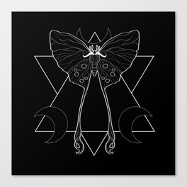 Silk Moth Canvas Print
