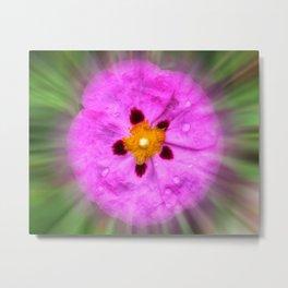 Colors In Bloom 033 Metal Print