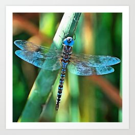 Fantasy Dragonfly In Turquoise and Black Art Print
