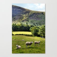 Lucky Sheep Canvas Print