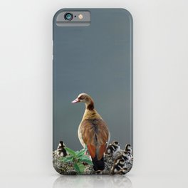 Egyptian Goose and Goslings iPhone Case